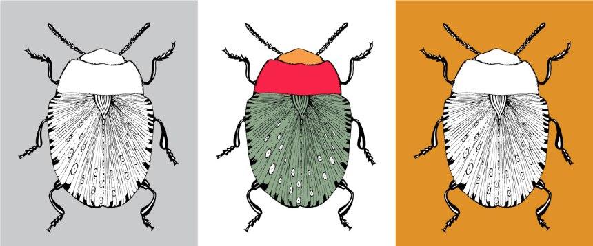 annex_beetle_featured