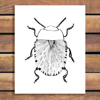 Illustration by Brina Schenk - Beetle Art Print