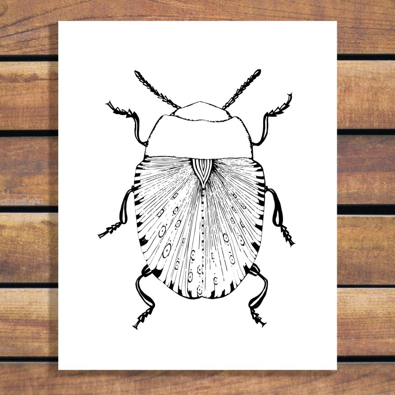 Illustration by Brina Schenk - Beetle Art Print